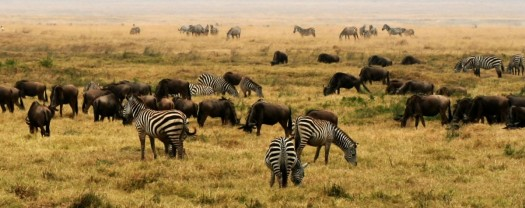 Easy Science for Kids on Africa - Image of a Grassland in Africa