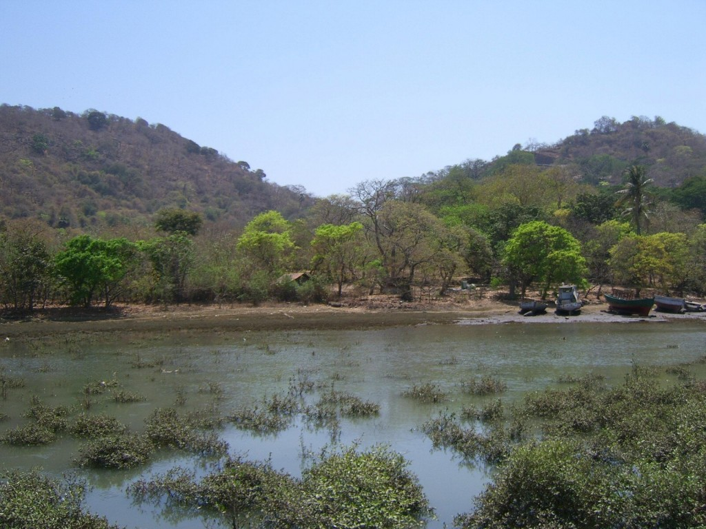Fun Science Facts for Kids on Elephanta Island - Image of the Trees on Elephanta Island