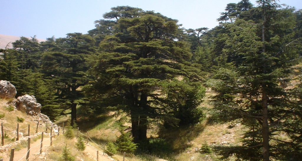 Kids Science Fun Facts on Lebanon - Image of Lebanon Cedar Forest