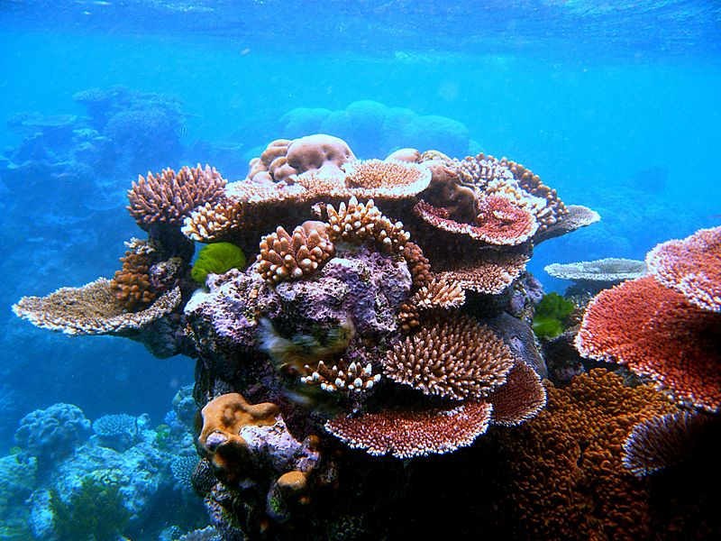 The Great Barrier Reef Worksheet – FREE Word Searches for School Kids
