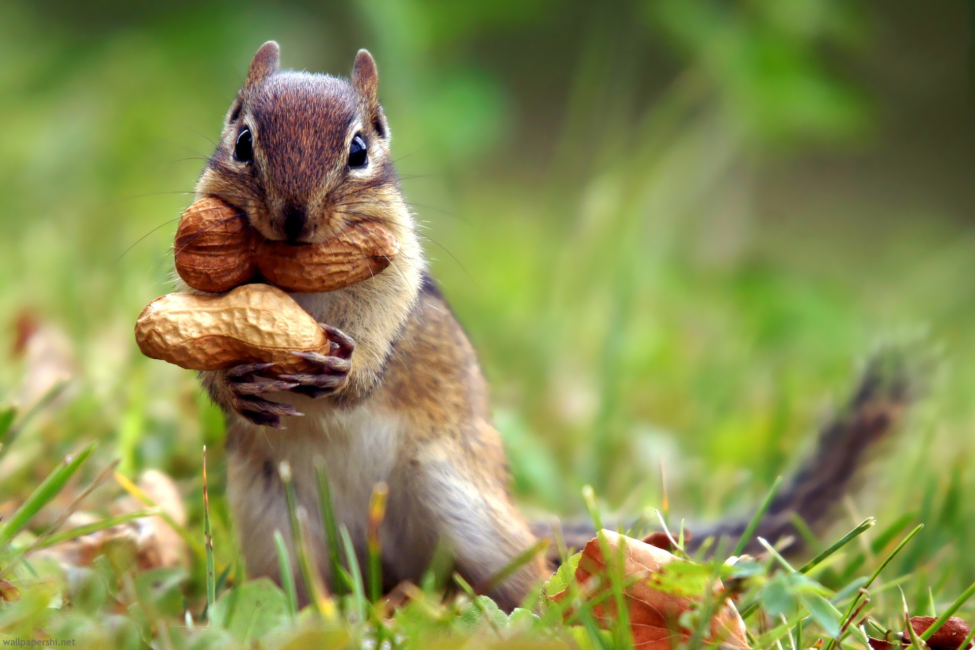 Fun Squirrels Quiz – FREE Interactive Easy Science Quiz Questions