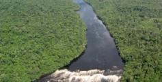 Easy Geography for Kids All about the Top 10 Longest Rivers - Image of the Amazon River