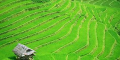 Fun Facts for Kids All About Growing Food - Image of Rice Terraces