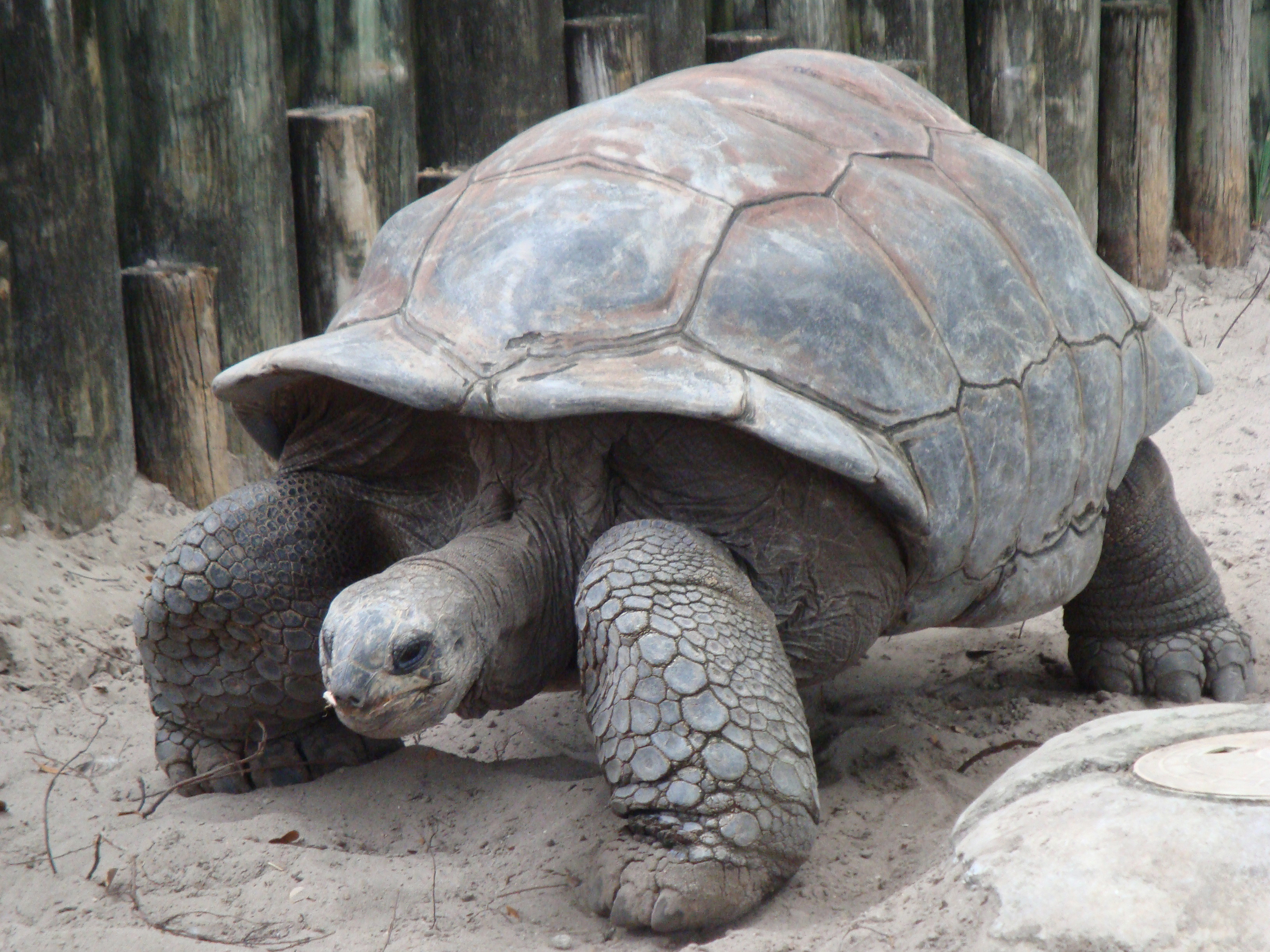 How the Tortoise Got its Shell Worksheet – FREE Hidden Word Puzzle