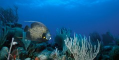 Fun Facts for Kids on the Oceans of the World - Image of the Belize Reef