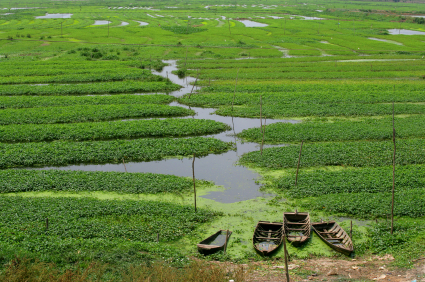 Fun Geography Facts all about Cambodia - Image of a farmland in Cambodia