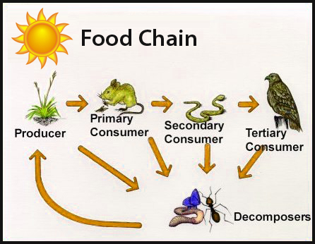 Producers and Consumers Habitats