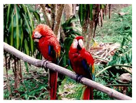 colored birds live in rain forests.